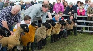 Photo Courtesy of the the Scottish Farmer